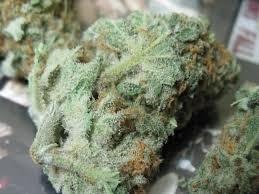 mr nice strain cannabis-bud