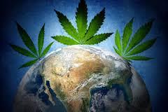 Global Cannabis Use – A Brief History