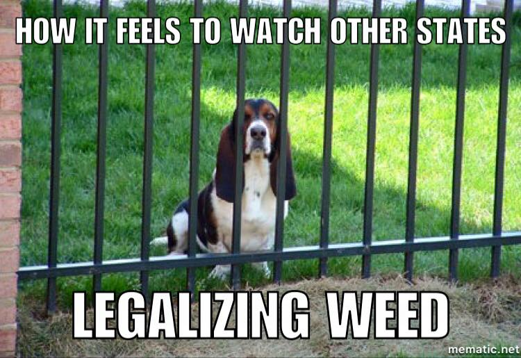 Weed Dog- Other states Legalize