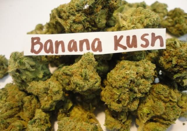 Banana Kush buds