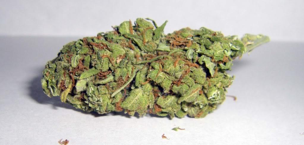 THC Bomb Hybrid cannabis strain