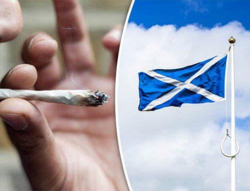 SNP Votes For Measures To Decriminalise Cannabis