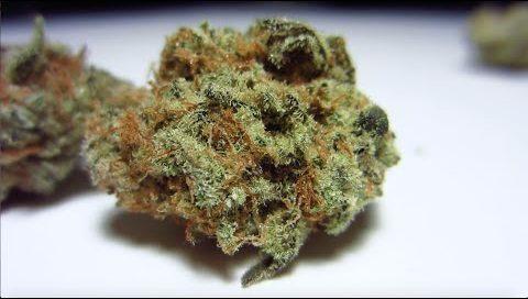 Allen Wrench Strain Sativa Cannabis