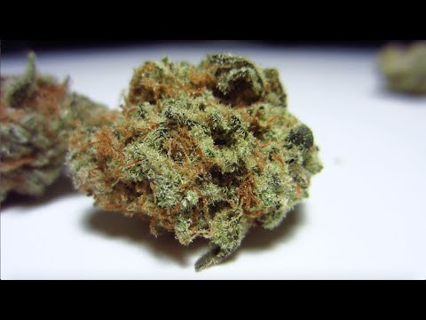 Allen Wrench Strain Sativa Cannabis