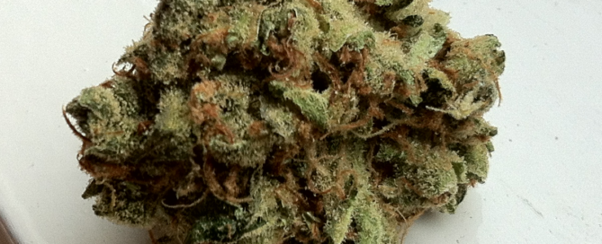 A frosty looking Amsterdam Haze cannabis flower