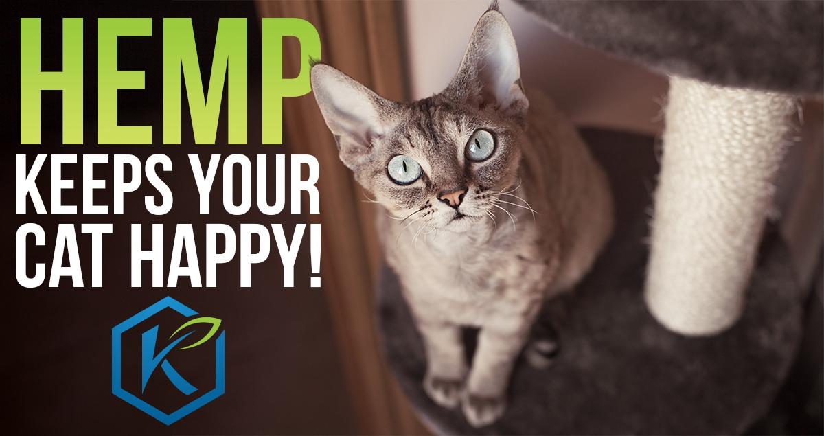 Hemp Litter Cat