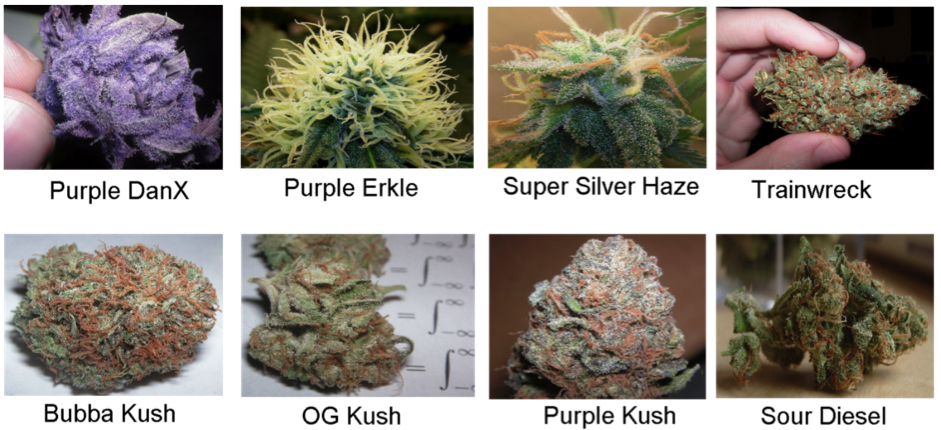 8 strains of the highest quality