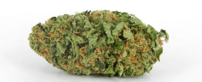 Northern lights Cannabis Bud