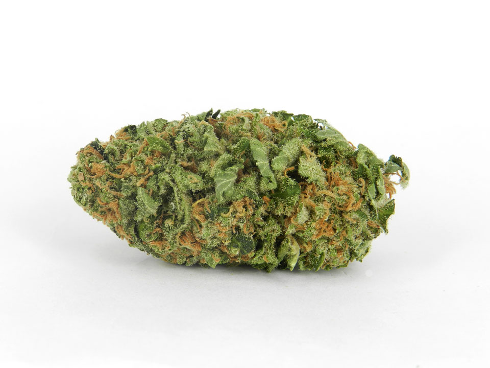 lit review on cannabis Published december 3, 2013 last updated 11/04/2014 florida residents may soon vote on an amendment to legalize medical marijuana the proposed two-page amendment can be viewed at the website.