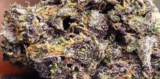Purple Urkle strain review