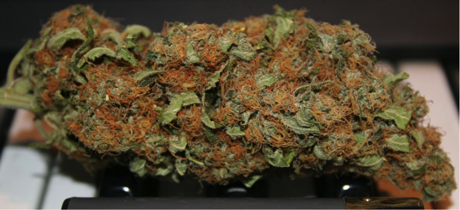 Run out of weed? Not with this bud you won't.