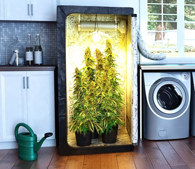 Indoor Cannabis grow set up
