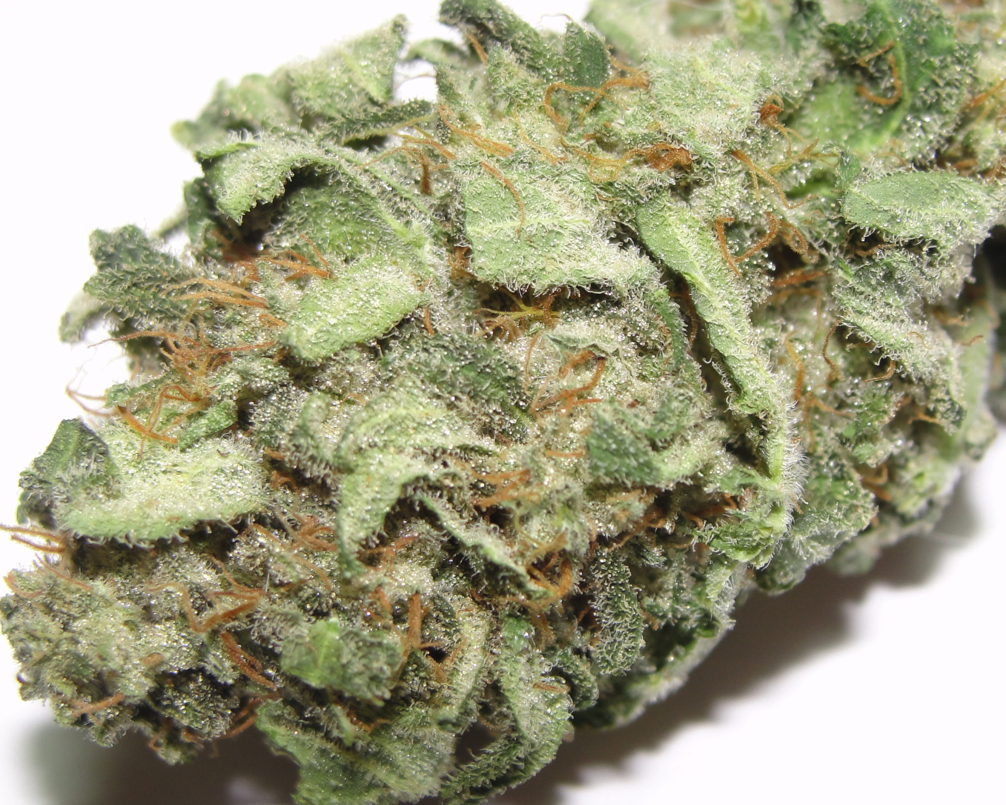 White Rhino strain Indica Cannabis Strain