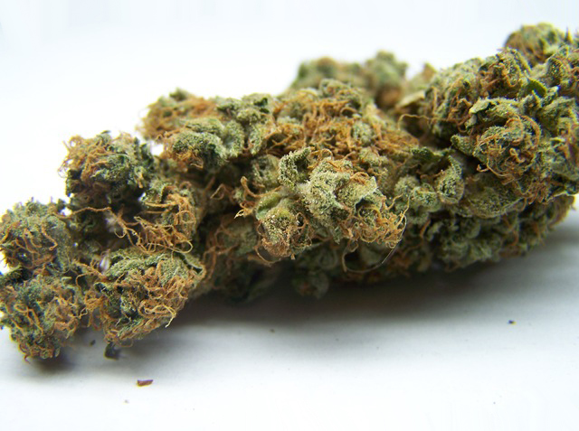 Cannabis Maple Leaf Strain