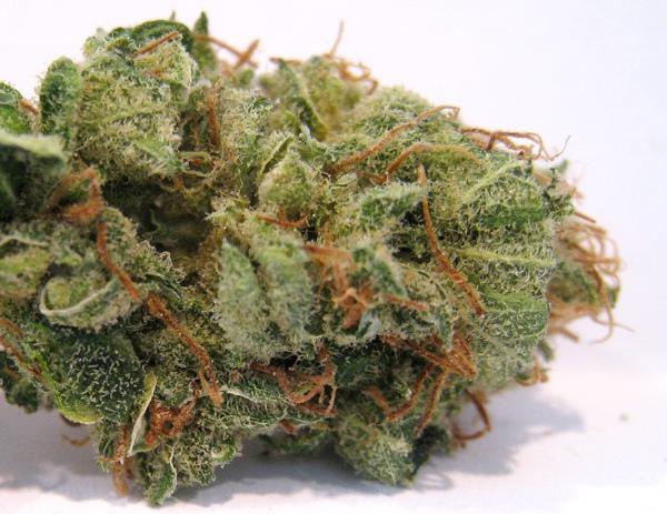 Pineapple Express Cannabis nug