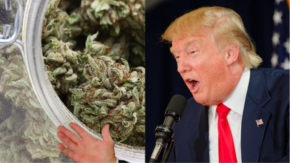 Donald Trump Cannabis Legalization 2016