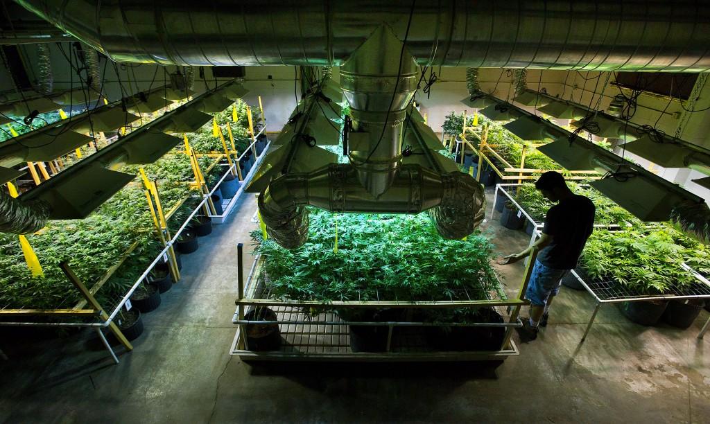 Colorado Cannabis Growers