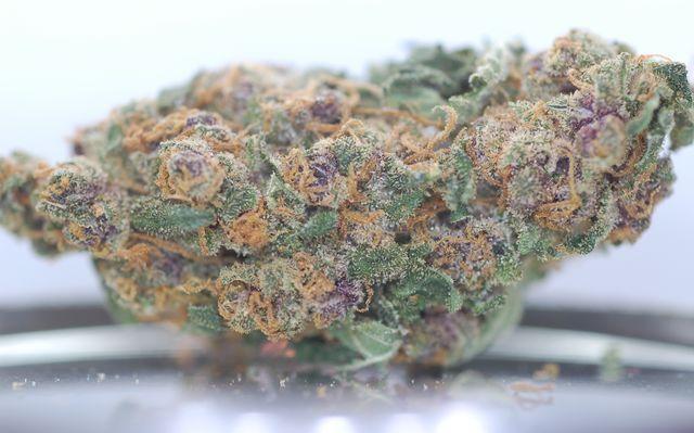 Blueberry Strain Cannabis