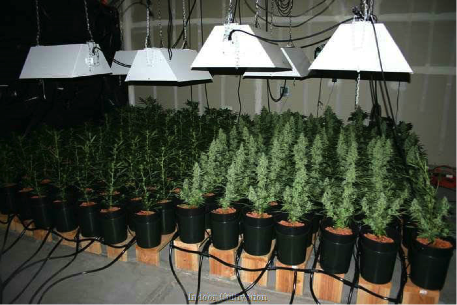 Autoflower Cannabis Ruderalis grow set up