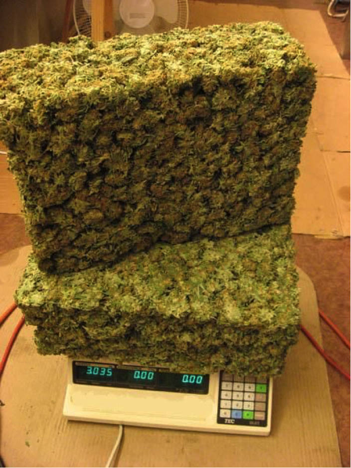 Bigger yields using hydroponics