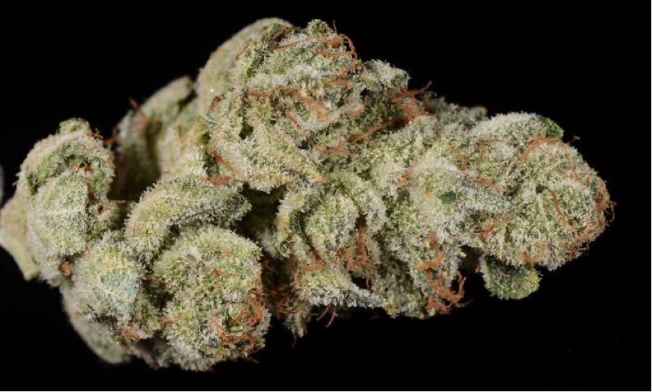 gorilla-glue Cannabis Strains For First-Time Growers