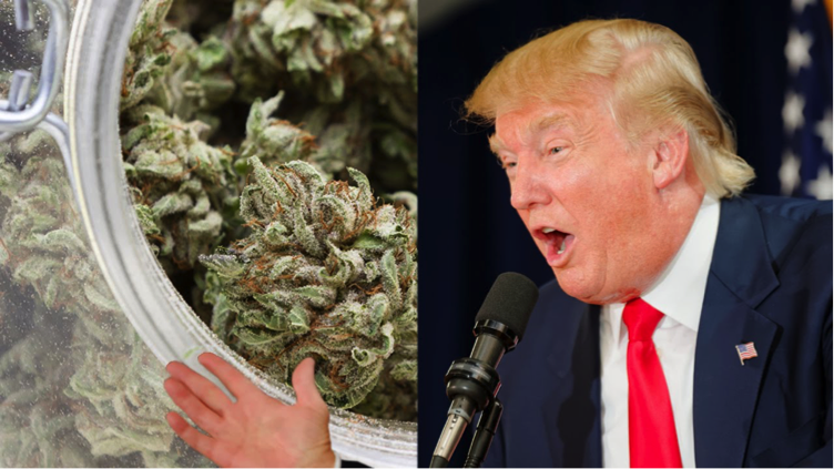 It is still unknown where Trump will stand on cannabis