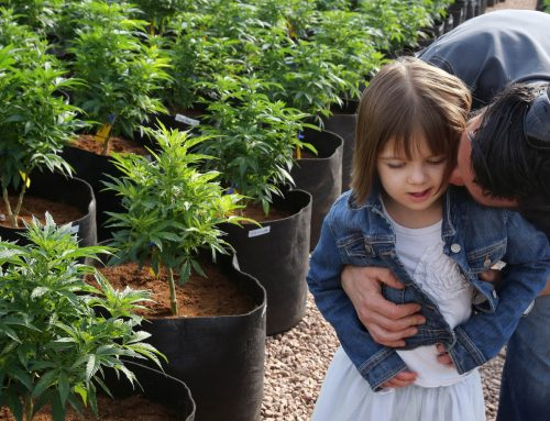 Can CBD Help Epilepsy or is THC Needed to be Effective?