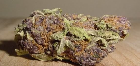 Purple Bud Cannabis strain