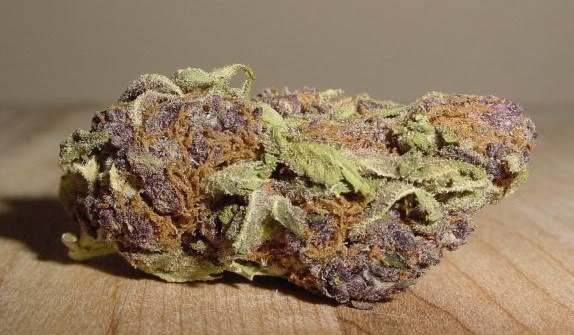 Purple Bud Cannabis strain