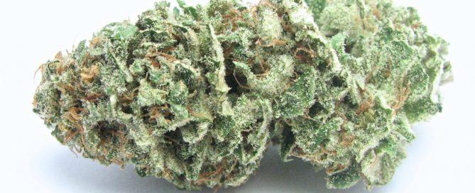 Diesel Strain review Cannabis