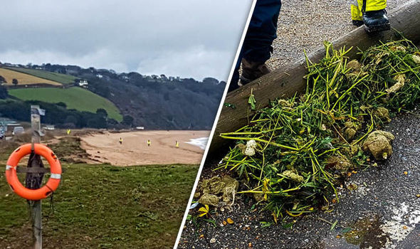 cannabis washed up on Devon Beach