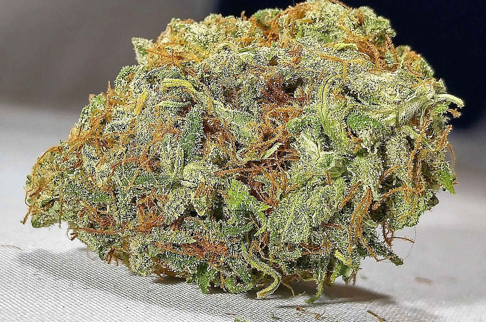 Malawi Gold Cannabis Strain Review