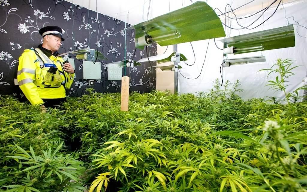 UK Cannabis legalisation