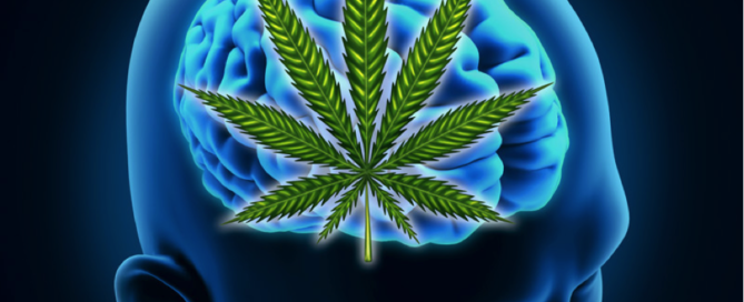 Can Cannabis Cure Alzheimer's