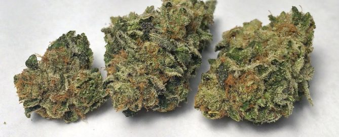 Girl Scout Cookies Strain Review