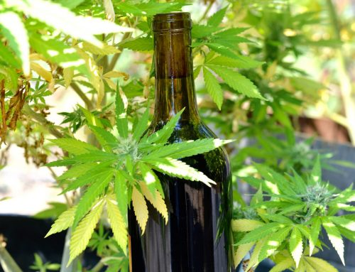 Fermented Cannabis: Whipping Up Some Weed Wine
