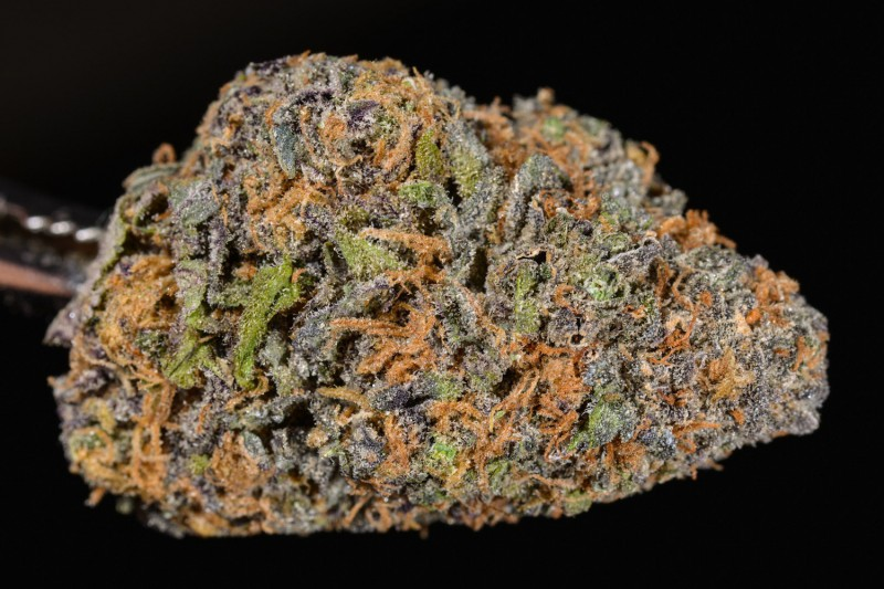 Grand Daddy Purple Strain review