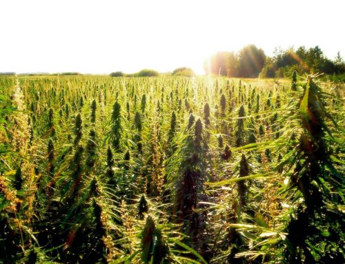 The Benefits of Industrial Hemp and Legalization 2017