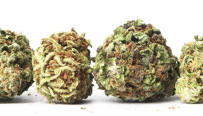 The 10 Strongest Strains on Earth Right Now