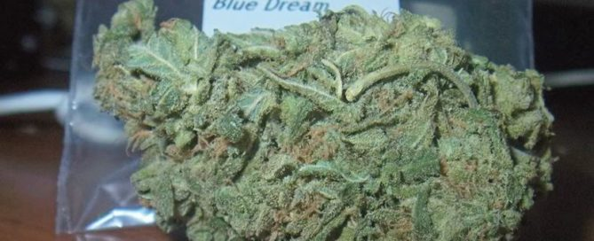 Blue Dream Strain