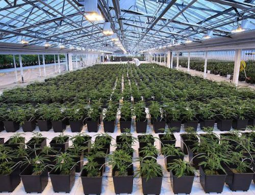 The Cannabis Company with Federally Legal Product in the U.S. and Canada Launches Public Offering