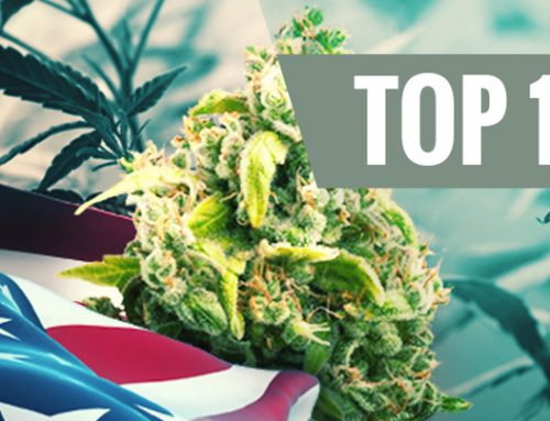 The Top 10 All-American Cannabis Strains