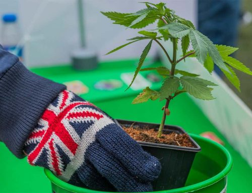 Cannabis in the UK: Why Being a Brit Sucks