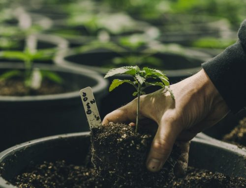 10 Ways Most First-Time Growers Go Wrong