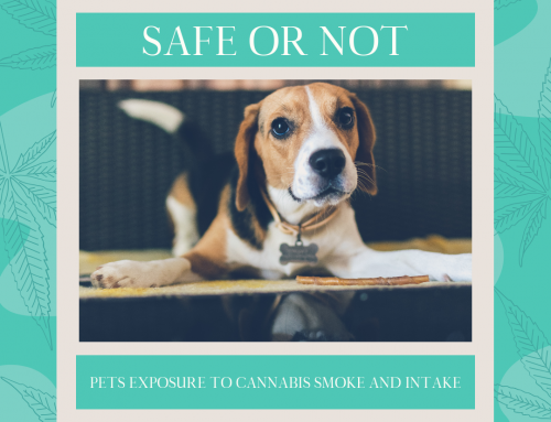 Safe or Not: Pets' Exposure to Cannabis Smoke and Intake